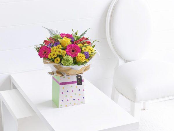 Vibrant Box Plus