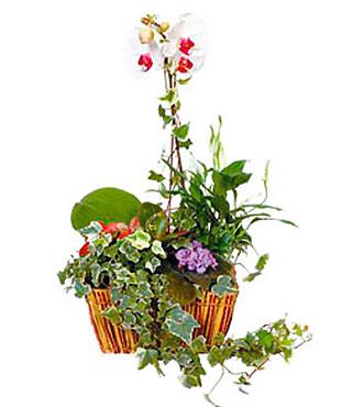 Argmt of Plants in