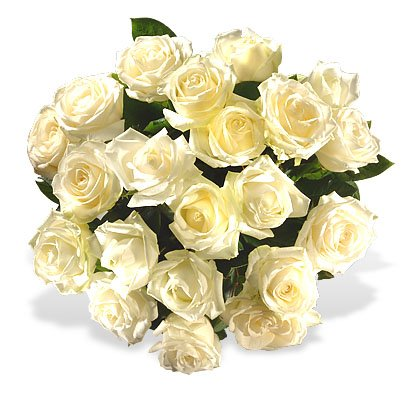 White Roses