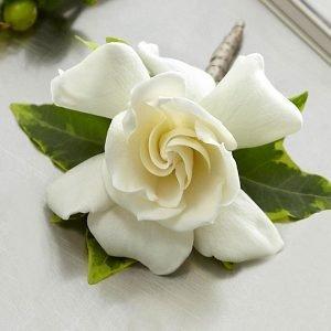 Boutonniere  Gardenia